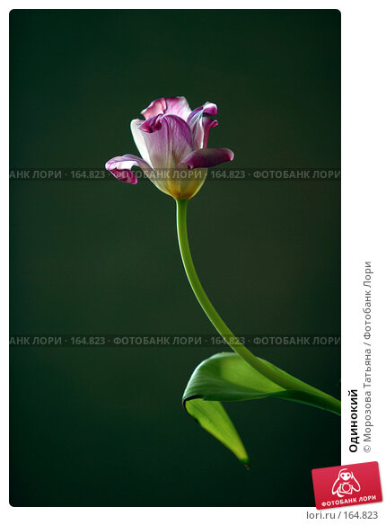 Одинокий, фото № 164823, снято 8 марта 2006 г. (c) Морозова Татьяна / Фотобанк Лори