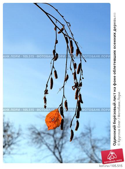 Одинокий берёзовый лист на фоне облетевших осенних деревьев, фото № 105515, снято 28 октября 2007 г. (c) Круглов Олег / Фотобанк Лори