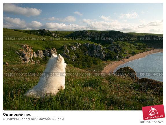 Одинокий пес, фото № 155523, снято 8 мая 2006 г. (c) Максим Горпенюк / Фотобанк Лори