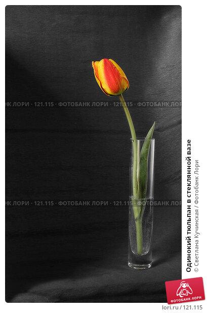 Купить «Одинокий тюльпан в стеклянной вазе», фото № 121115, снято 15 декабря 2017 г. (c) Светлана Кучинская / Фотобанк Лори