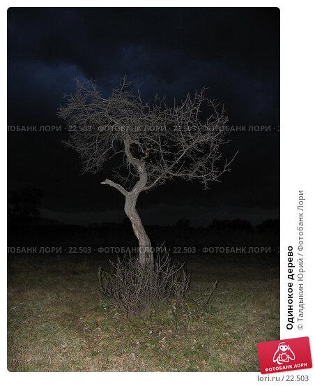 Купить «Одинокое дерево», фото № 22503, снято 6 октября 2006 г. (c) Талдыкин Юрий / Фотобанк Лори