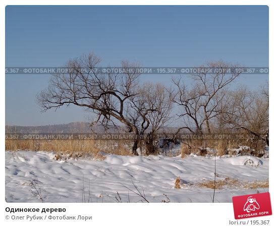 Одинокое дерево, фото № 195367, снято 28 января 2008 г. (c) Олег Рубик / Фотобанк Лори