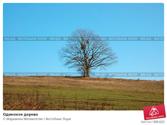 Одинокое дерево, фото № 309623, снято 10 декабря 2006 г. (c) Марианна Меликсетян / Фотобанк Лори