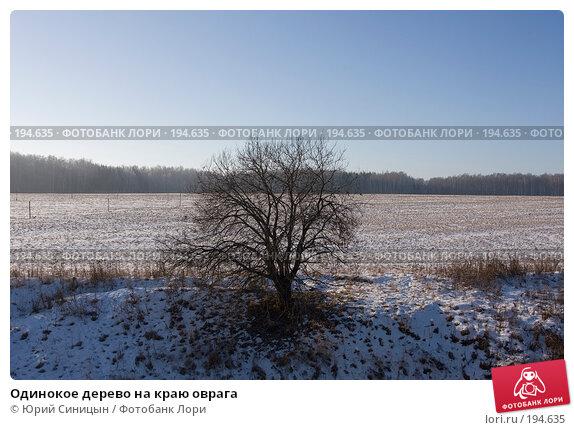 Одинокое дерево на краю оврага, фото № 194635, снято 8 января 2008 г. (c) Юрий Синицын / Фотобанк Лори
