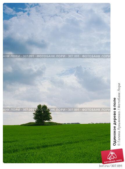 Одинокое дерево в поле, фото № 307091, снято 17 мая 2008 г. (c) Галина Лукьяненко / Фотобанк Лори
