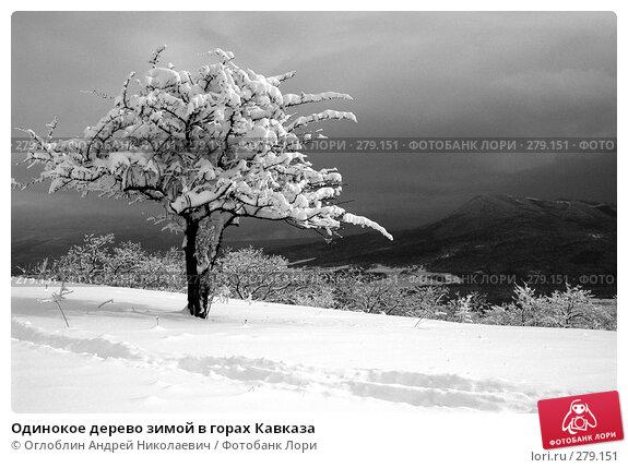Одинокое дерево зимой в горах Кавказа, фото № 279151, снято 27 мая 2017 г. (c) Оглоблин Андрей Николаевич / Фотобанк Лори