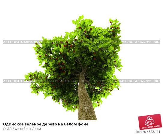 Одинокое зеленое дерево на белом фоне, иллюстрация № 322111 (c) ИЛ / Фотобанк Лори