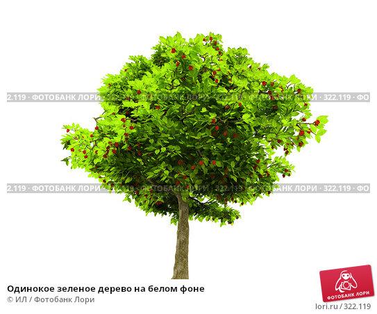 Одинокое зеленое дерево на белом фоне, иллюстрация № 322119 (c) ИЛ / Фотобанк Лори