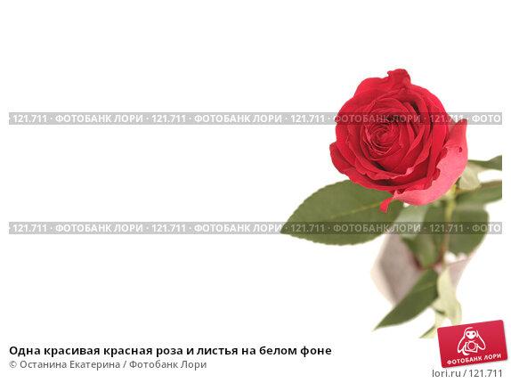 Одна красивая красная роза и листья на белом фоне, фото № 121711, снято 12 октября 2007 г. (c) Останина Екатерина / Фотобанк Лори