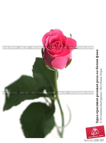 Купить «Одна красивая розовая роза на белом фоне», фото № 208787, снято 19 января 2008 г. (c) Останина Екатерина / Фотобанк Лори