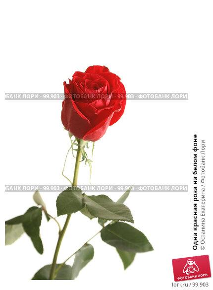 Одна красная роза на белом фоне, фото № 99903, снято 12 октября 2007 г. (c) Останина Екатерина / Фотобанк Лори