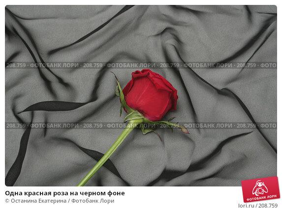 Одна красная роза на черном фоне, фото № 208759, снято 15 января 2008 г. (c) Останина Екатерина / Фотобанк Лори