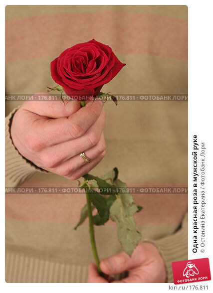 Купить «Одна красная роза в мужской руке», фото № 176811, снято 15 января 2008 г. (c) Останина Екатерина / Фотобанк Лори
