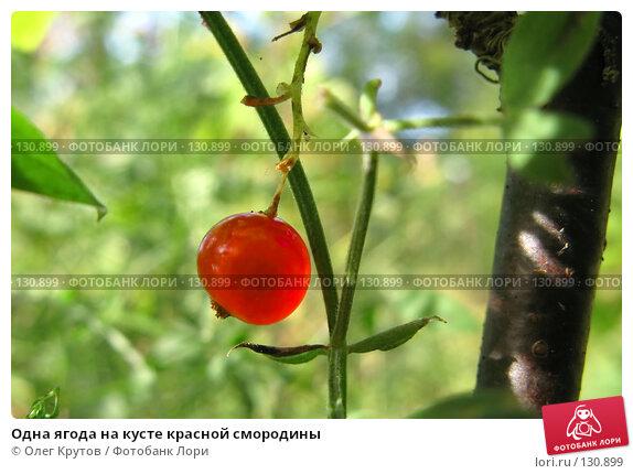 Одна ягода на кусте красной смородины, фото № 130899, снято 23 мая 2017 г. (c) Олег Крутов / Фотобанк Лори