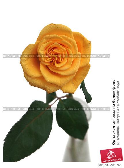 Купить «Одна желтая роза на белом фоне», фото № 208763, снято 15 января 2008 г. (c) Останина Екатерина / Фотобанк Лори
