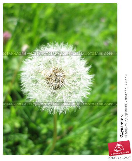 Одуванчик, фото № 42255, снято 29 апреля 2007 г. (c) Александр Демшин / Фотобанк Лори
