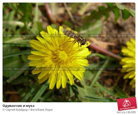 Одуванчик и муха, фото № 26035, снято 9 мая 2006 г. (c) Сергей Ксейдор / Фотобанк Лори