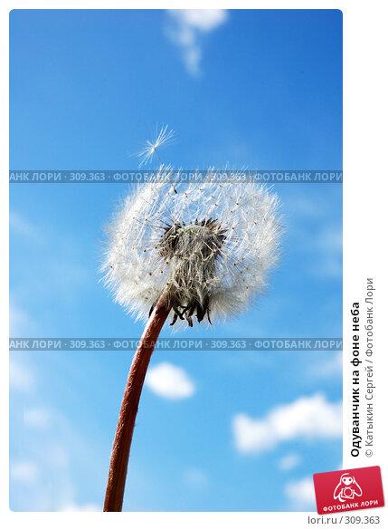 Купить «Одуванчик на фоне неба», фото № 309363, снято 31 мая 2008 г. (c) Катыкин Сергей / Фотобанк Лори