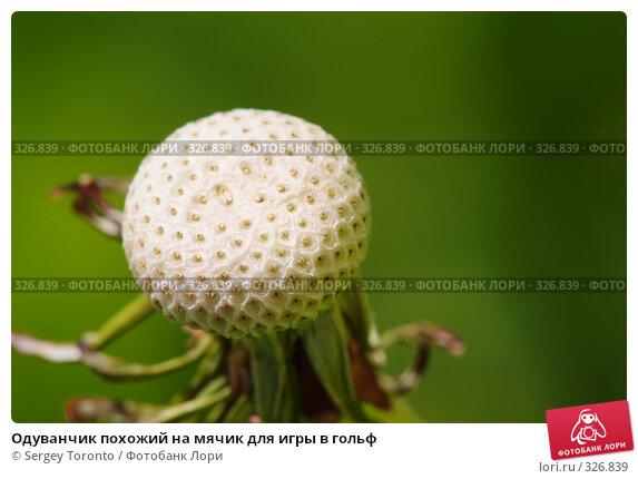 Одуванчик похожий на мячик для игры в гольф, фото № 326839, снято 1 июня 2008 г. (c) Sergey Toronto / Фотобанк Лори