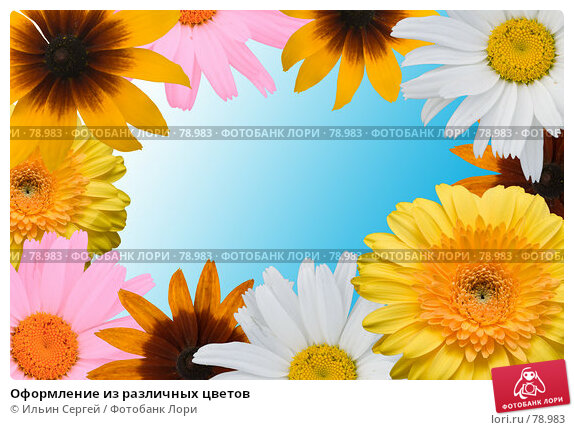 Оформление из различных цветов, фото № 78983, снято 26 октября 2016 г. (c) Ильин Сергей / Фотобанк Лори