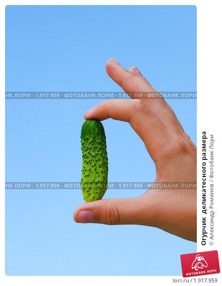 Купить «Огурчик  деликатесного размера», фото № 1917959, снято 14 августа 2010 г. (c) Александр Романов / Фотобанк Лори