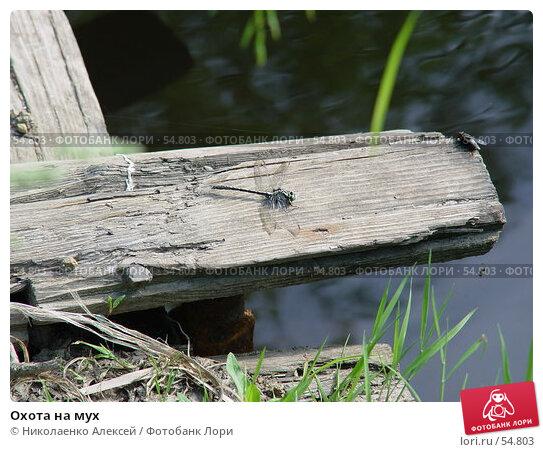Охота на мух, фото № 54803, снято 18 июня 2007 г. (c) Николаенко Алексей / Фотобанк Лори