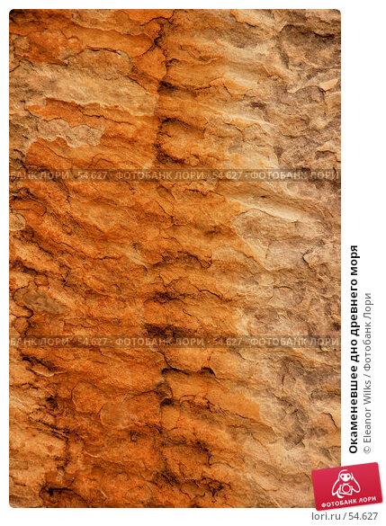 Окаменевшее дно древнего моря, фото № 54627, снято 4 июля 2007 г. (c) Eleanor Wilks / Фотобанк Лори