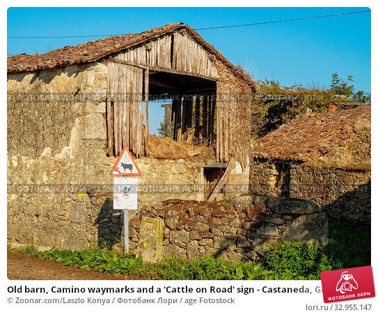 Old barn, Camino waymarks and a 'Cattle on Road' sign - Castaneda, Galicia, Spain. Стоковое фото, фотограф Zoonar.com/Laszlo Konya / age Fotostock / Фотобанк Лори