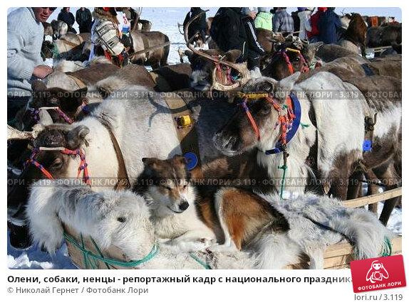 Олени, собаки, ненцы - репортажный кадр с национального праздника, фото № 3119, снято 25 марта 2006 г. (c) Николай Гернет / Фотобанк Лори