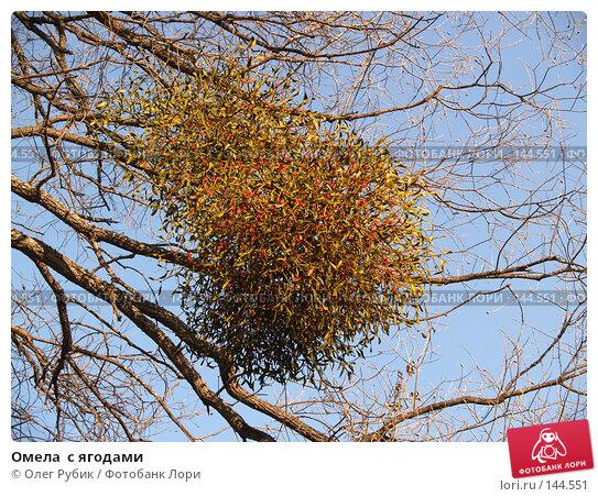 Купить «Омела  с ягодами», фото № 144551, снято 6 ноября 2007 г. (c) Олег Рубик / Фотобанк Лори