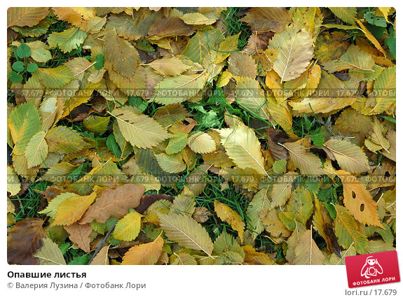 Опавшие листья, фото № 17679, снято 3 октября 2006 г. (c) Валерия Потапова / Фотобанк Лори