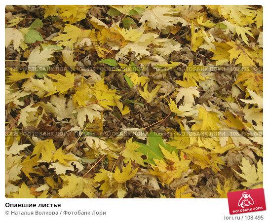 Купить «Опавшие листья», фото № 108495, снято 24 октября 2007 г. (c) Наталья Волкова / Фотобанк Лори