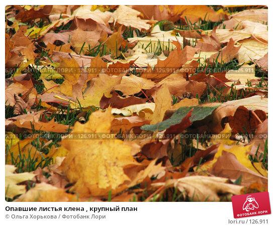 Опавшие листья клена , крупный план, фото № 126911, снято 11 октября 2007 г. (c) Ольга Хорькова / Фотобанк Лори