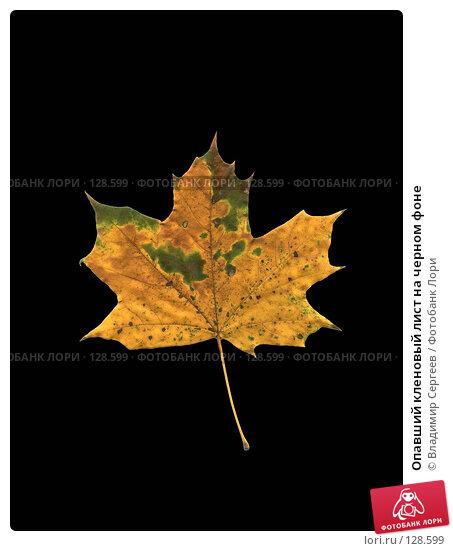 Опавший кленовый лист на черном фоне, фото № 128599, снято 24 сентября 2017 г. (c) Владимир Сергеев / Фотобанк Лори