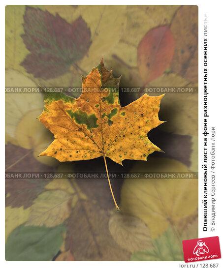Опавший кленовый лист на фоне разноцветных осенних листьев, фото № 128687, снято 28 июля 2017 г. (c) Владимир Сергеев / Фотобанк Лори