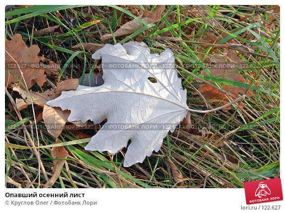 Опавший осенний лист, фото № 122627, снято 17 октября 2007 г. (c) Круглов Олег / Фотобанк Лори