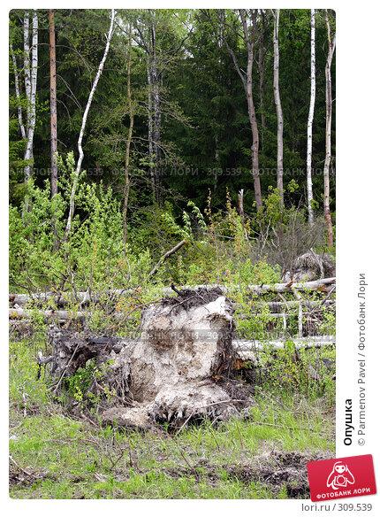 Опушка, фото № 309539, снято 10 мая 2008 г. (c) Parmenov Pavel / Фотобанк Лори