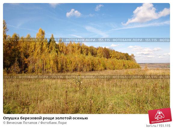 Опушка березовой рощи золотой осенью, фото № 151115, снято 8 октября 2006 г. (c) Вячеслав Потапов / Фотобанк Лори