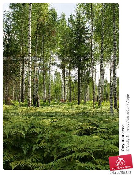 Опушка леса, фото № 50343, снято 27 апреля 2017 г. (c) Vasily Smirnov / Фотобанк Лори