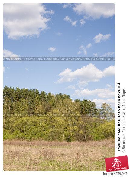 Опушка смешанного леса весной, фото № 279947, снято 27 апреля 2008 г. (c) Вячеслав Потапов / Фотобанк Лори
