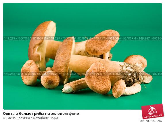 Купить «Опята и белые грибы на зеленом фоне», фото № 149287, снято 29 сентября 2007 г. (c) Елена Блохина / Фотобанк Лори