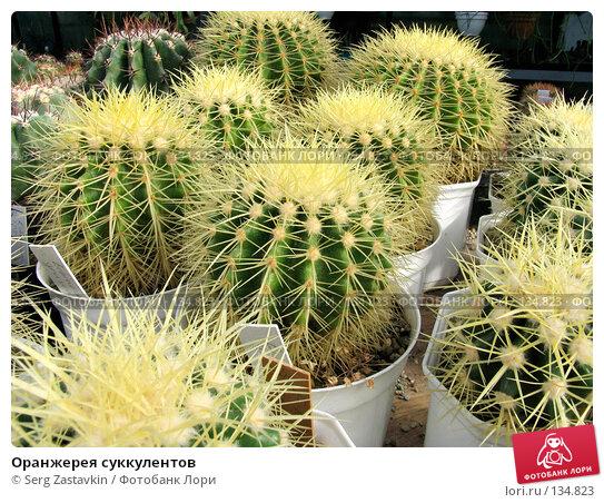 Купить «Оранжерея суккулентов», фото № 134823, снято 3 марта 2005 г. (c) Serg Zastavkin / Фотобанк Лори