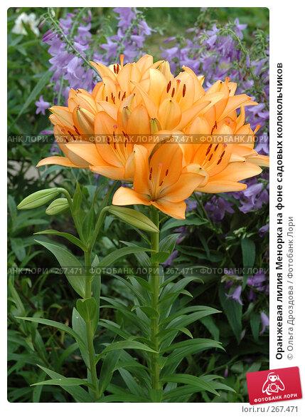 Оранжевая лилия Менорка на фоне садовых колокольчиков, фото № 267471, снято 17 июля 2005 г. (c) Ольга Дроздова / Фотобанк Лори
