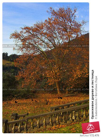 Оранжевое дерево и лестница, фото № 172479, снято 3 января 2007 г. (c) Бабенко Денис Юрьевич / Фотобанк Лори