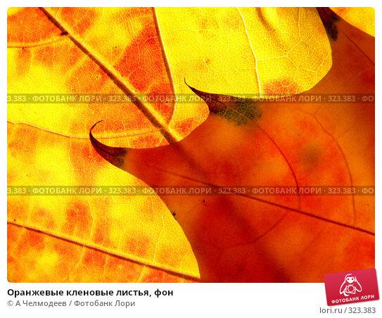 Оранжевые кленовые листья, фон, фото № 323383, снято 20 октября 2007 г. (c) A Челмодеев / Фотобанк Лори