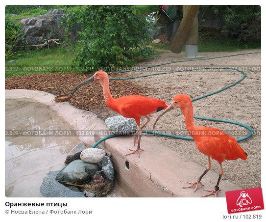 Оранжевые птицы, фото № 102819, снято 28 марта 2017 г. (c) Ноева Елена / Фотобанк Лори