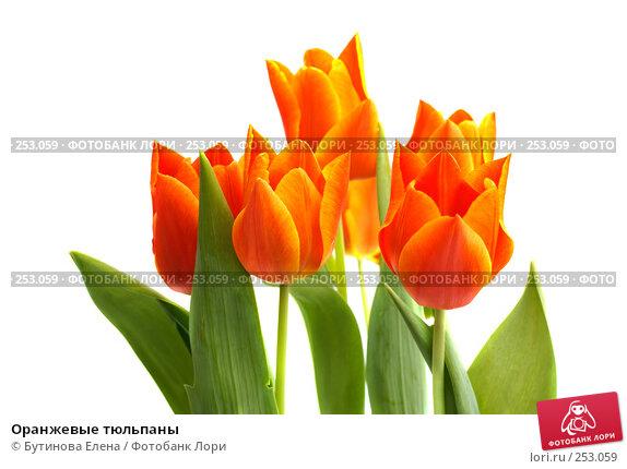 Оранжевые тюльпаны, фото № 253059, снято 27 марта 2008 г. (c) Бутинова Елена / Фотобанк Лори