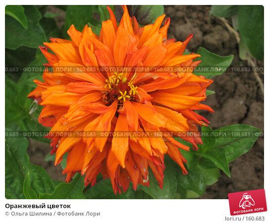 Купить «Оранжевый цветок», фото № 160683, снято 26 июля 2007 г. (c) Ольга Шилина / Фотобанк Лори