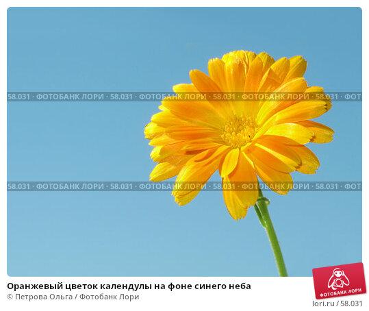 Оранжевый цветок календулы на фоне синего неба, фото № 58031, снято 1 июля 2007 г. (c) Петрова Ольга / Фотобанк Лори