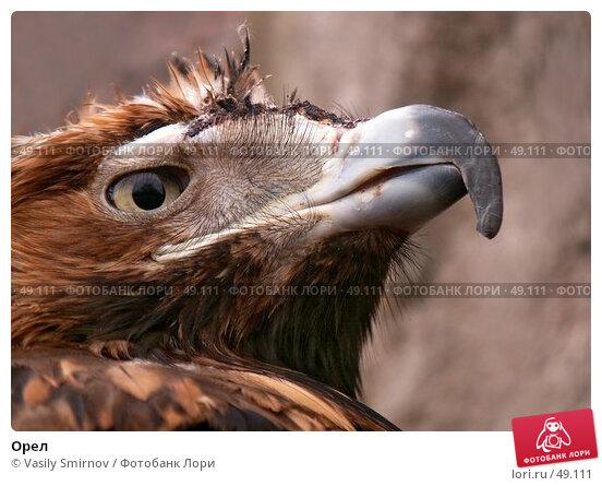 Орел, фото № 49111, снято 23 мая 2017 г. (c) Vasily Smirnov / Фотобанк Лори